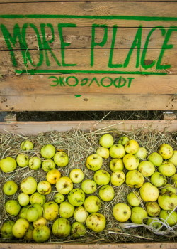 День яблок