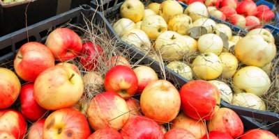 день яблок 12 сентября