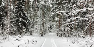 Красивый-зимний-лес-в-Гусь-Хрустальном-02