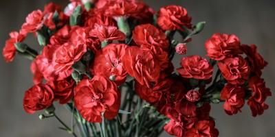 red-petaled-flowers-136255